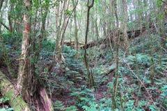 Vista nella foresta, più alta cima Fotografia Stock Libera da Diritti
