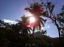 Vista nella foresta pluviale nel Perù Fotografia Stock