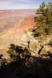 Vista nella gola del fiume Colorado Immagine Stock Libera da Diritti