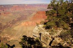 Vista nella gola del fiume Colorado Immagine Stock