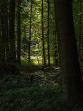 Vista nella luce dalla foresta scura Fotografia Stock Libera da Diritti