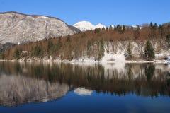 Vista no bohinj maravilhoso do lago no tempo de inverno ensolarado nevado com reflexão na água, bohinj, slovenia Imagens de Stock