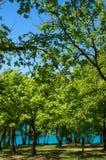 Vista no bosque do carvalho fotos de stock