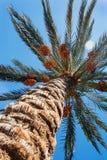 vista no céu através de um tiro do close-up da palma de data imagens de stock royalty free