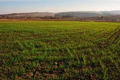 Vista no campo de milho da exploração agrícola com grama verde e no solo no campo com os montes do outono no fundo Foto de Stock Royalty Free