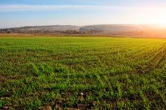 Vista no campo de milho da exploração agrícola com grama verde e no solo no campo com os montes do outono no fundo Imagens de Stock