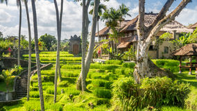 Vista no campo em Bali foto de stock royalty free