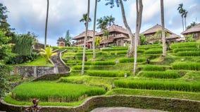 Vista no campo em Bali fotos de stock royalty free