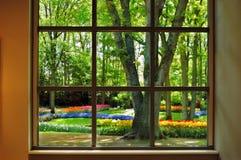 Vista no jardim de Keukenhof Fotos de Stock Royalty Free