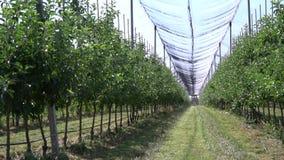 Vista no pomar de maçã com a anti rede da proteção da saraiva em um dia ensolarado vídeos de arquivo
