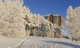 Vista no prédio de apartamentos alto moderno da elevação através da floresta nevado no dia ensolarado do inverno imagem de stock royalty free