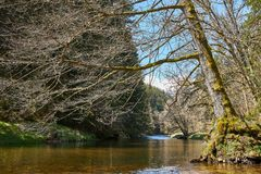 Vista no wutach do rio com uma árvore pendendo sobre na Floresta Negra em Alemanha foto de stock royalty free