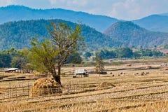 Vista nordica dell'azienda agricola Fotografia Stock Libera da Diritti