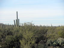 Vista nuvolosa del deserto Fotografia Stock Libera da Diritti