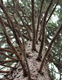 Vista original da árvore Fotos de Stock