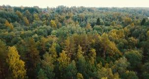 Vista orizzontale del fuco aereo della foresta e delle conifere nel Nord Paesaggio russo con i pini e l'abete, soleggiati video d archivio