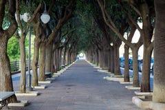 Vista orizzontale di un viale alberato accanto al Mar Ionio Fotografie Stock