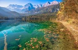 Vista outonal do lago Tovel, Val di Non dentro do parque natural de Adamello-Brenta, Trentino Alto-Adige, Itália fotos de stock royalty free