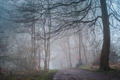 vista pacifica di scarsa visibilità in foresta nebbiosa, in sentiero nel bosco nebbioso nebbioso nell'inverno o nel tempo di moll Fotografia Stock