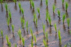 Vista Paddy Field a terrazze nel villaggio dell'Mae-inceppamento, Chaingmai immagini stock libere da diritti
