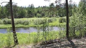 Vista panorámica de la derecha hacia la izquierda de un paisaje típico para el taiga siberiano almacen de metraje de vídeo