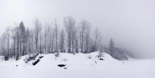 Vista panorámica de la orilla del lago del bosque en invierno Imágenes de archivo libres de regalías