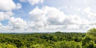 Vista panorámica de la selva tropical y de ruinas mayas PA nacional de Tikal Imágenes de archivo libres de regalías