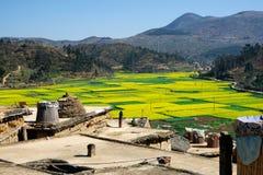 Vista panorámica de los campos y de las montañas amarillos de flor en el fondo Foto de archivo libre de regalías