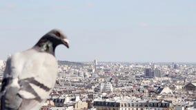 Vista panorámica de Montmarte y de París con el pájaro en primero plano metrajes