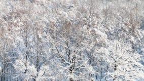 vista panorámica del bosque nevado en invierno Foto de archivo