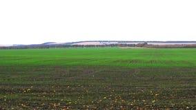 Vista panorámica del campo arado limpio con trigo de invierno en el otoño, tiempo nublado almacen de metraje de vídeo