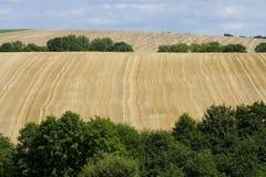 Vista panorámica del campo de maíz después de la cosecha en paisaje Fotos de archivo
