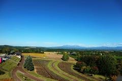 Vista panorámica del campo del remiendo contra el cielo azul Fotografía de archivo libre de regalías