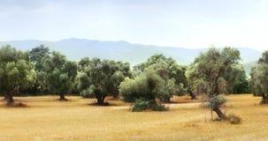 Vista panorámica del campo verde oliva para 59 la cantidad de los segundos 4K almacen de video