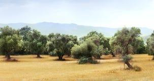 Vista panorámica del campo verde oliva para 59 la cantidad de los segundos 4K metrajes