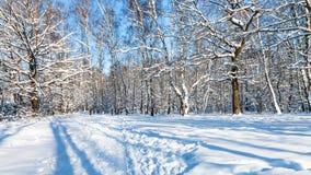 vista panorámica del claro del bosque en día de invierno soleado Imagen de archivo