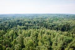Vista panorámica del horizonte lejano del bosque brumoso Fotografía de archivo