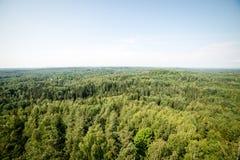Vista panorámica del horizonte lejano del bosque brumoso Imagen de archivo libre de regalías