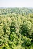 Vista panorámica del horizonte lejano del bosque brumoso Fotos de archivo libres de regalías