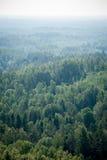 Vista panorámica del horizonte lejano del bosque brumoso Imagenes de archivo