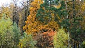 Vista panorámica del parque hermoso del otoño metrajes