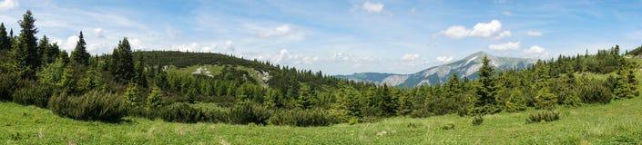 Vista panorámica del prado alpestre en las montan@as austríacas Imágenes de archivo libres de regalías