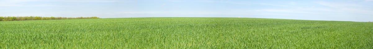 Vista panorámica del prado del resorte Foto de archivo libre de regalías