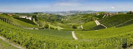 Vista panorámica del viñedo del langhe Fotografía de archivo libre de regalías