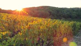 Vista panorámica hermosa de la puesta del sol sobre el viñedo en la colina almacen de video