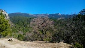 Vista panorâmica bonita da floresta verde, do céu azul brilhante e da árvore marrom só no primeiro plano fotos de stock royalty free