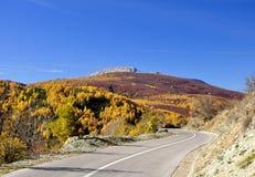 Vista panorâmica da estrada asfaltada na floresta dourada bonita da faia durante o outono foto de stock
