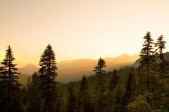 Vista panorâmica da montagem Rainier National Park Imagem de Stock