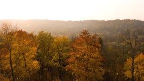 Vista panorâmica das árvores e da luz solar amarelas paisagem-brilhantes do outono no céu Embaçamento, pouca névoa Au dourado bri imagem de stock