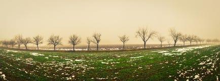 Vista panorâmica de árvores múltiplas Fotografia de Stock Royalty Free